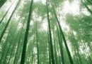 VIDEO: The Miracle of Chinese Bamboo